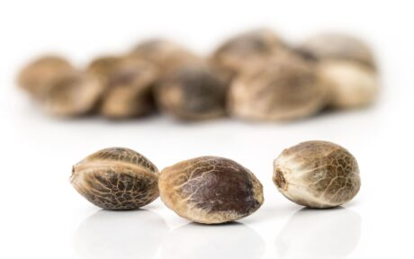 Cannabis seeds South Africa